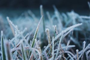 How To Winterize Your Colorado Lawn